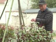 视频新闻|特色田园乡村里的幸福生活