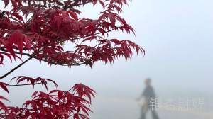 图说丨雾中桃花岛
