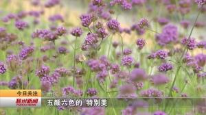 """视频新闻丨超养眼!邳州城区道路广场切入""""美颜""""模式"""