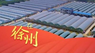 全面推进乡村振兴,加快农业农村现代化,徐州这样干!