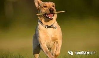 养狗人士,请进,因为非常重要!