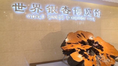 世界银杏博览馆开门迎客!吸引近万名游客参观