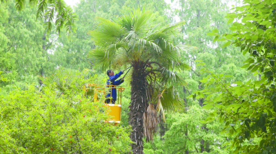 为市民打造美观、安全的绿色景观