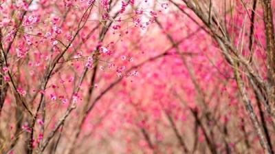 春天来了,这里的花太美了!