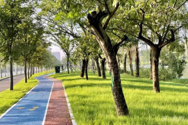 大美邳州丨清晨,六保河畔风景独好